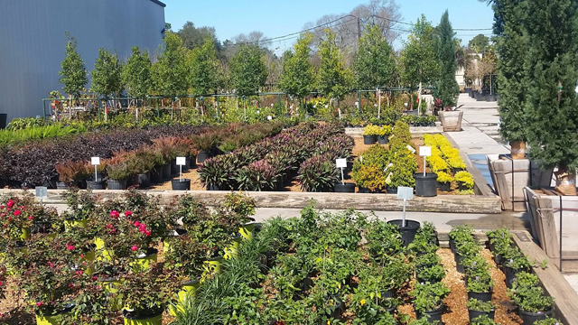 Landscape Nursery Lake Charles La Management Services Is One Of Southwest Louisiana S Leading Commercial And Residential Installation